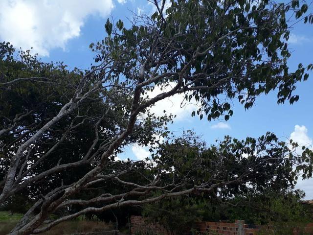 Terreno na Serra de Itabaiana - Foto 10