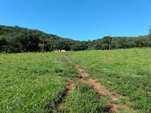 Fazenda no município de Bonfinópolis 24 alqueires - Foto 5