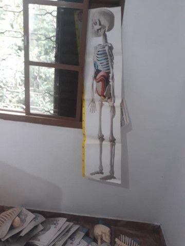 Esqueleto Humano - Coleção até o Fascículo 41 - Foto 3