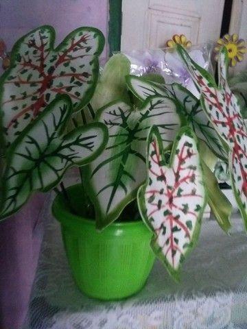 arranjos de flores  - Foto 6