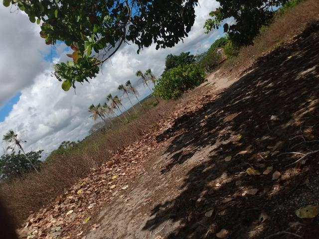 Terreno de 58 hactares com casa - Foto 10