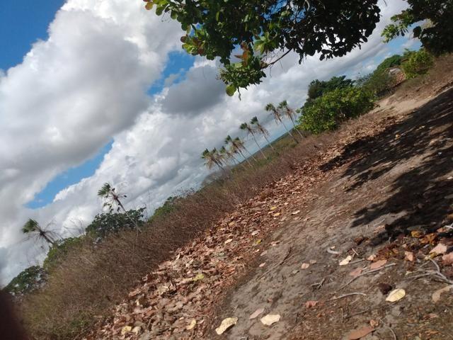 Terreno de 58 hactares com casa - Foto 12