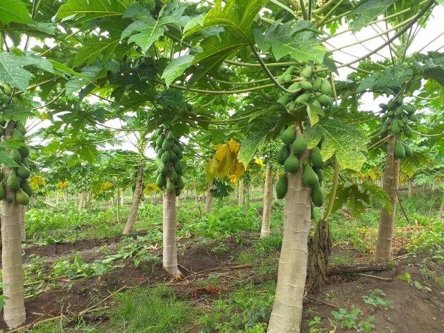 Frutas - Foto 2