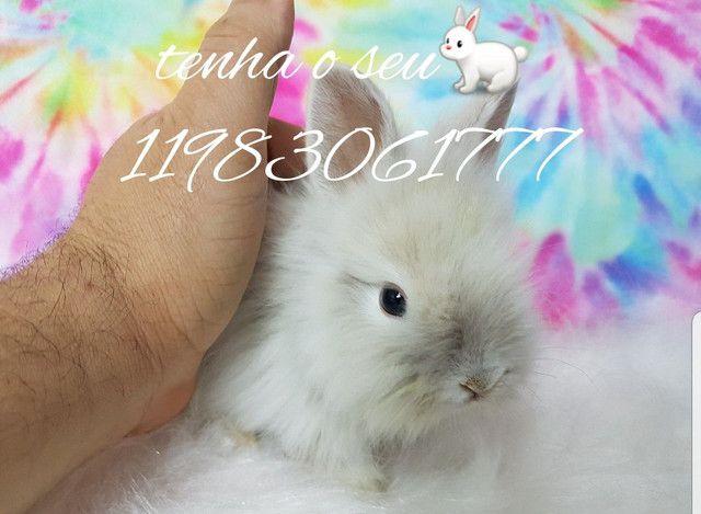 Mini coelhinho anão  fofura (alegra sua família) - Foto 3