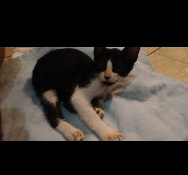 Doação filhote de gato - Foto 3