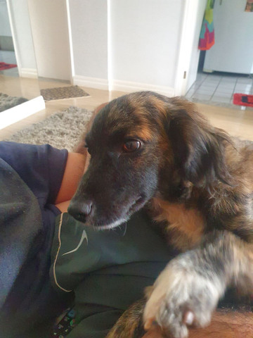 Cachorro encontrado / Adoção / Doação