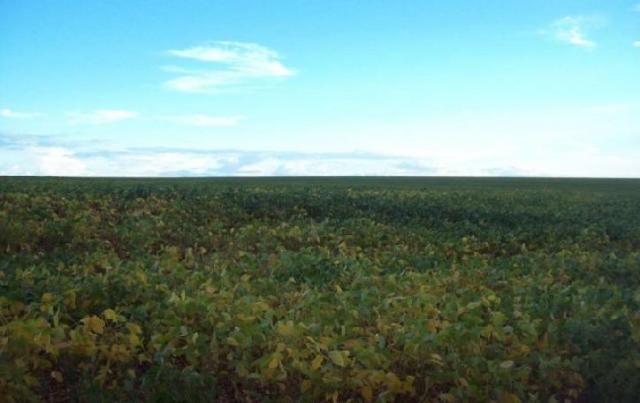 Fazenda em PEDRO AFONSO - TO, Dupla Aptidão