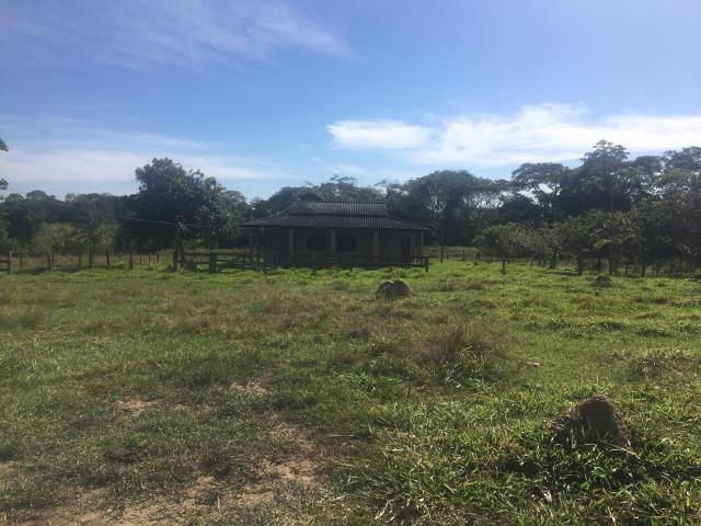 Sítio na Comunidade Carrijo à 60 Km do Trevo do Lagarto - Foto 14