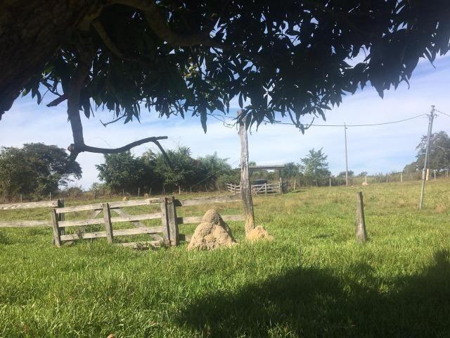 Sítio na Comunidade Carrijo à 60 Km do Trevo do Lagarto - Foto 5