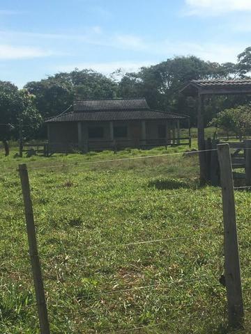 Sítio na Comunidade Carrijo à 60 Km do Trevo do Lagarto - Foto 19