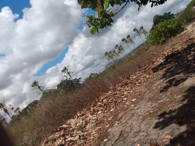 Terreno de 58 hactares com casa - Foto 11