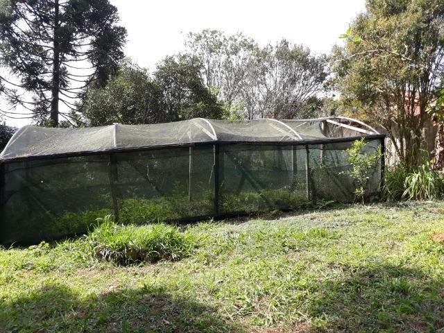 Chácara em Contenda - Urbana - Foto 20
