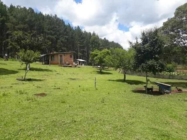 Linda Chácara 24.200 m2 ( 1 Alqueire) com 2 Casas - Palmas PR - Foto 19