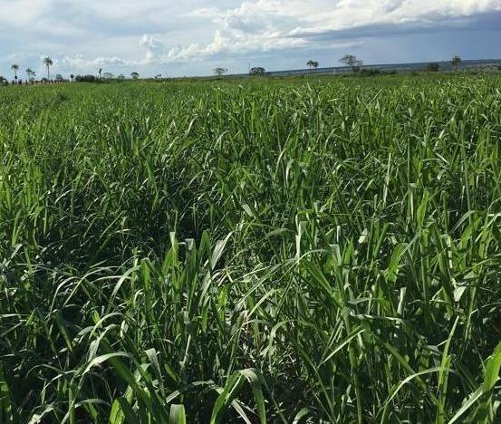 Oportunidade de Fazenda com 128 alqueires em Bataguassu Ms de frente p asfalto