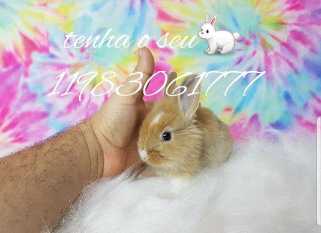 Mini coelhinho anão  fofura (alegra sua família) - Foto 4