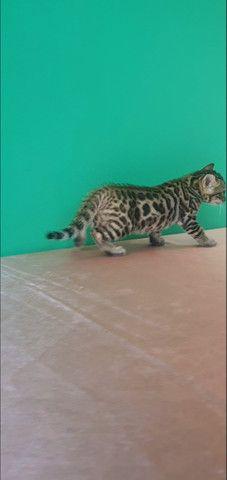 Gato de bengala (bengal) Mine Leopardo - Foto 4