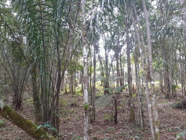 Chacara com 6,156 mts - Foto 18