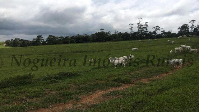 Fazenda pra pecuária, 180 alqueires (Nogueira Imóveis Rurais) - Foto 7