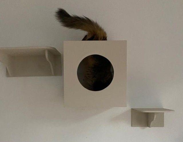 Casa brinquedo de gato - Foto 4