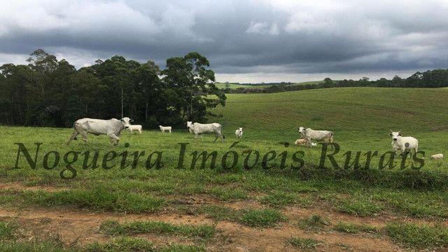 Fazenda pra pecuária, 180 alqueires (Nogueira Imóveis Rurais) - Foto 12