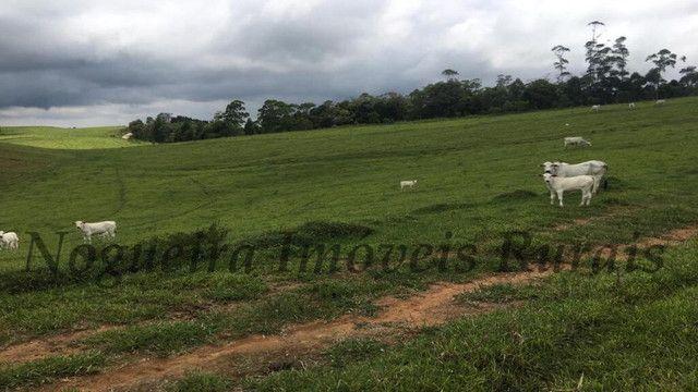 Fazenda pra pecuária, 180 alqueires (Nogueira Imóveis Rurais) - Foto 9