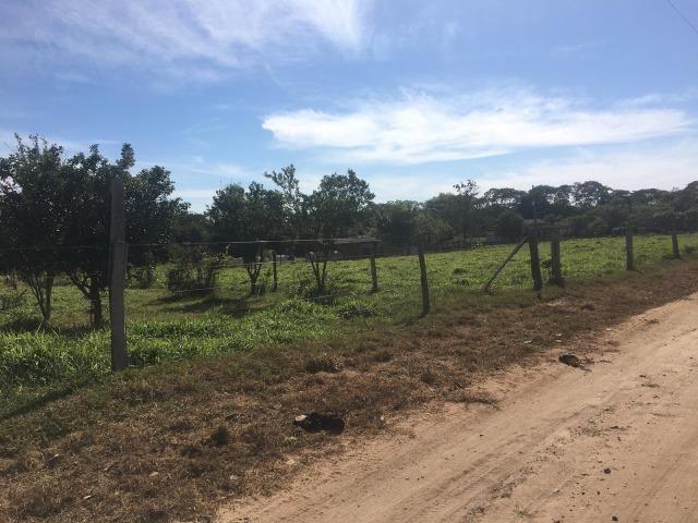 Sítio na Comunidade Carrijo à 60 Km do Trevo do Lagarto - Foto 4
