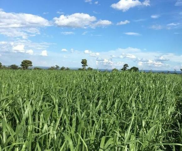 Oportunidade de Fazenda com 128 alqueires em Bataguassu Ms de frente p asfalto - Foto 2