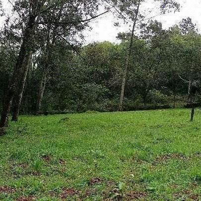 Sítio com 2 dormitórios à venda, 200000 m² por r$ 350.000,00 - santa terezinha - canela/rs - Foto 6