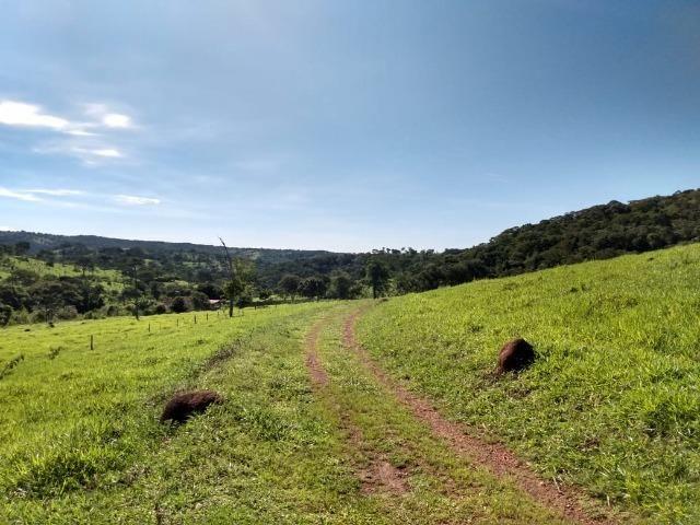 Fazenda no município de Bonfinópolis 24 alqueires - Foto 3