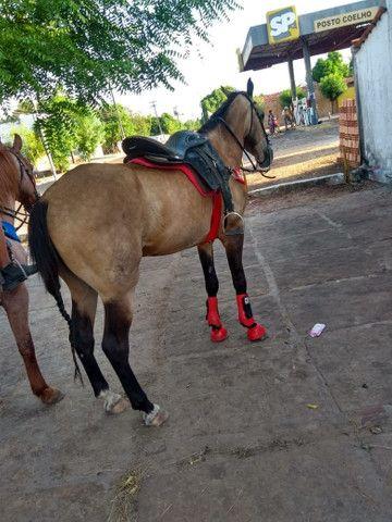 Cavalo de vaquejada corre de direita  - Foto 3
