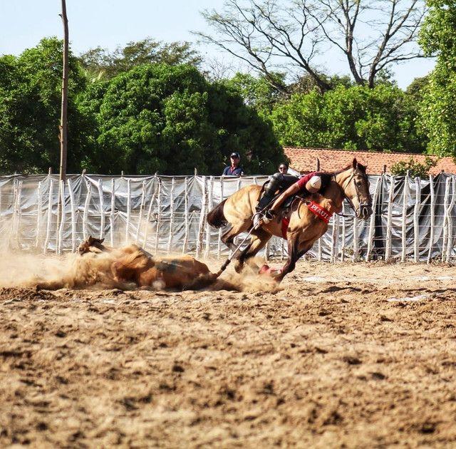 Cavalo de vaquejada corre de direita  - Foto 2