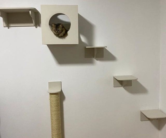 Casa brinquedo de gato - Foto 2