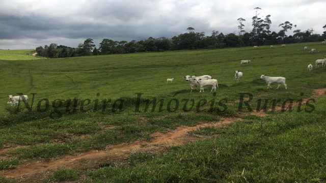 Fazenda pra pecuária, 180 alqueires (Nogueira Imóveis Rurais) - Foto 8