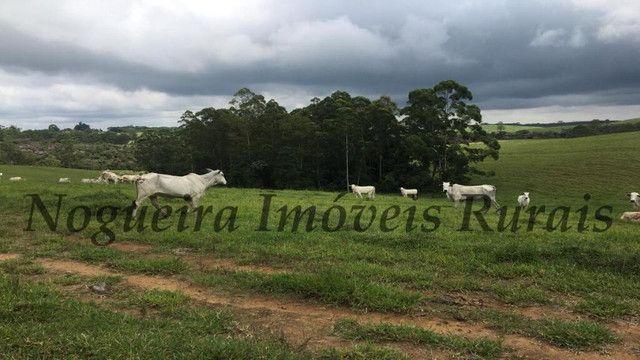 Fazenda pra pecuária, 180 alqueires (Nogueira Imóveis Rurais) - Foto 15