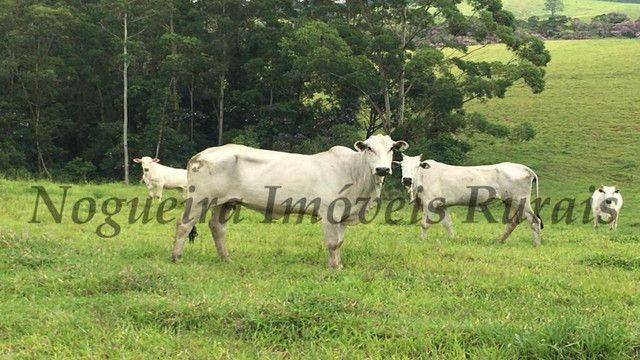 Fazenda pra pecuária, 180 alqueires (Nogueira Imóveis Rurais) - Foto 5