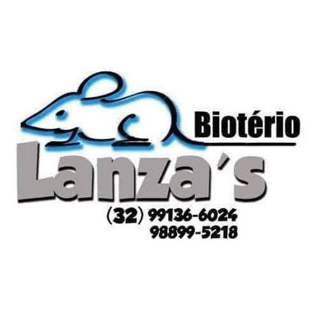 Biotério - Foto 4