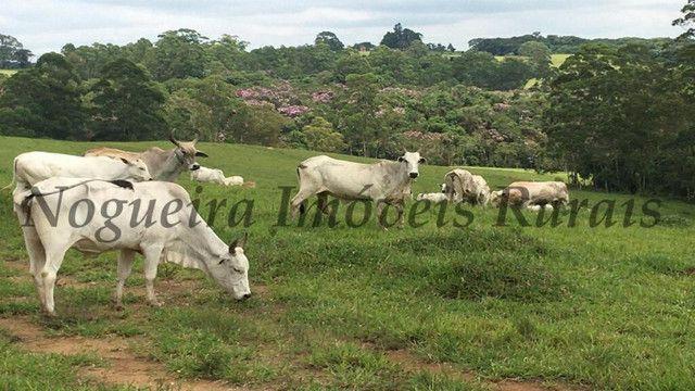 Fazenda pra pecuária, 180 alqueires (Nogueira Imóveis Rurais) - Foto 14