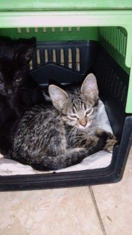 Doação filhote de gato - Foto 4