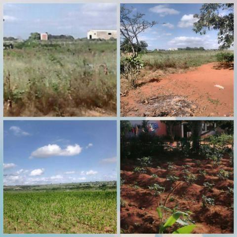 Vende-se quatro tarefas e meia de terra em Alagoas