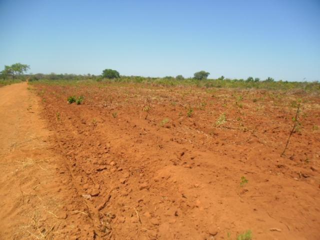 Fazenda em SANTA RITA - TO  Ótima Argila p/ Soja