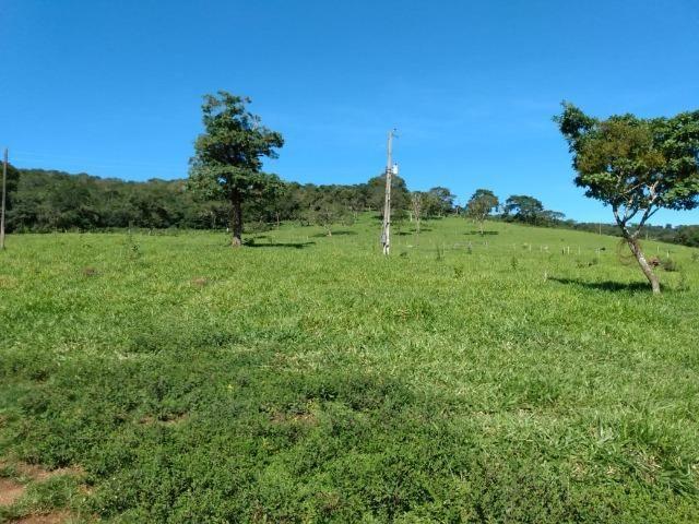 Fazenda no município de Bonfinópolis 24 alqueires - Foto 4