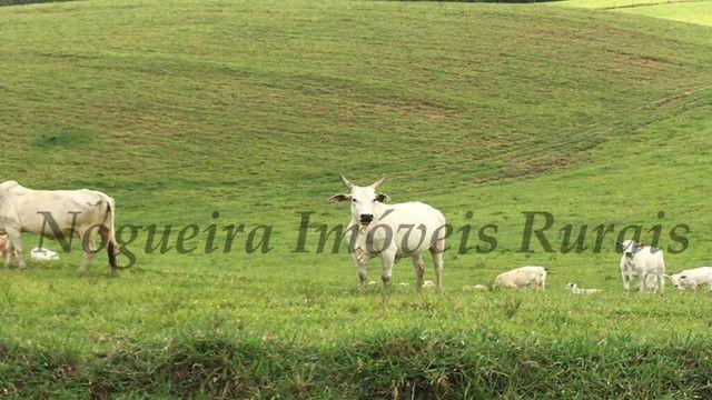 Fazenda pra pecuária, 180 alqueires (Nogueira Imóveis Rurais) - Foto 4
