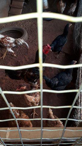 Vendo estas galinhas,  - Foto 2