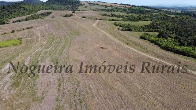 Fazenda com 400 alqueires na região (Nogueira Imóveis Rurais) - Foto 4