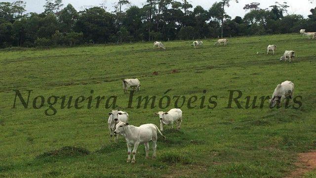 Fazenda pra pecuária, 180 alqueires (Nogueira Imóveis Rurais) - Foto 2
