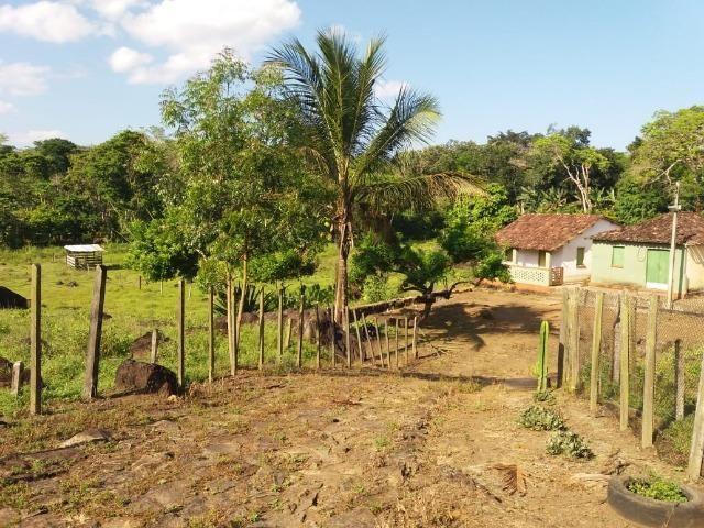 Fazenda no Jardim Grapiúna - Foto 6