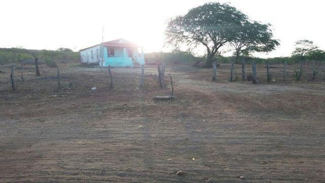 Fazenda sao pedro em jeremoabo/ba