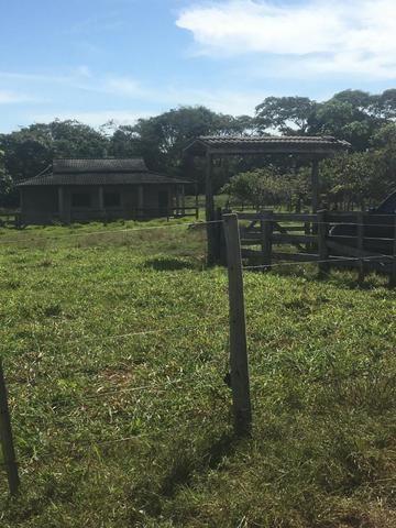 Sítio na Comunidade Carrijo à 60 Km do Trevo do Lagarto - Foto 12