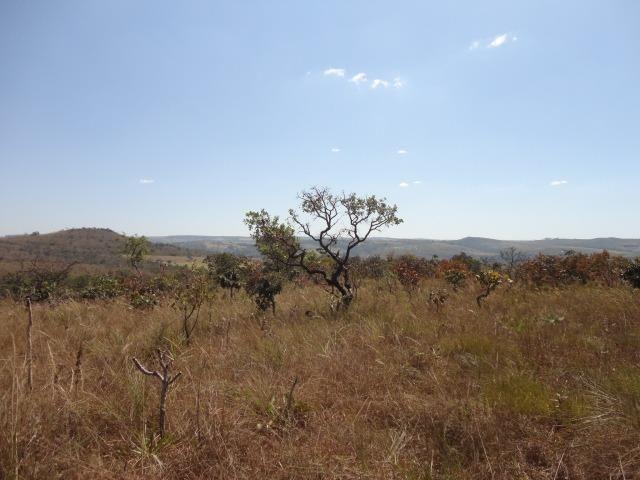 Área de Fazenda com 48 Hectares Localizado no Santo Antônio do Descoberto - Go - Foto 2