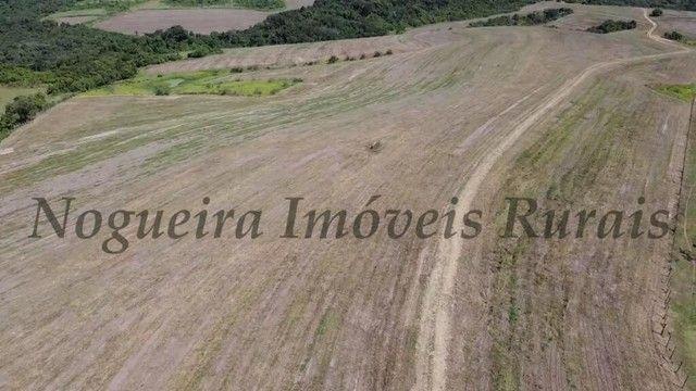 Fazenda com 400 alqueires na região (Nogueira Imóveis Rurais) - Foto 13